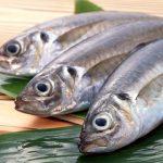 【鱼霸海鲜】顶级现捞竹筴鱼
