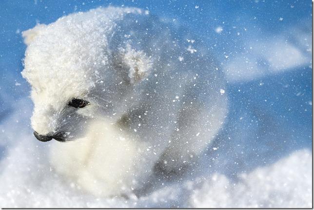 polar-bear-1888038